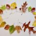 Blättergirlade mit den schönsten Herbstblättern